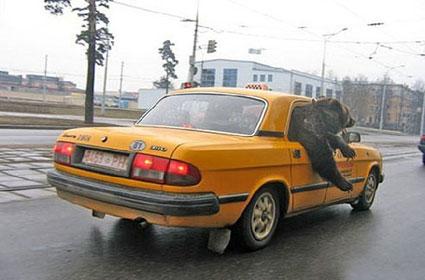 taxi-oso.jpg